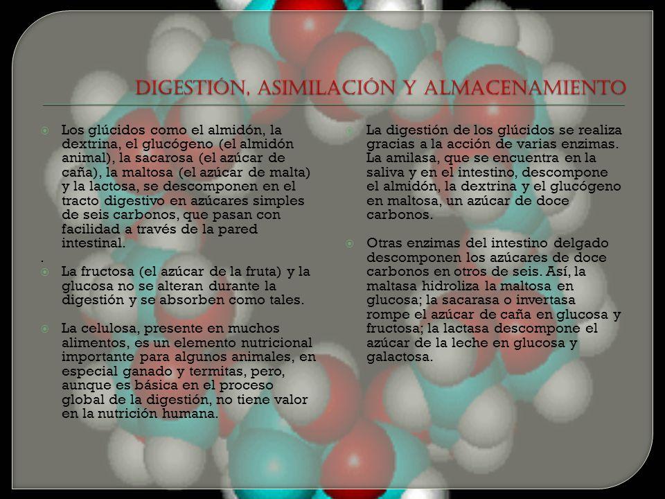 DIGESTIÓN, ASIMILACIÓN Y ALMACENAMIENTO
