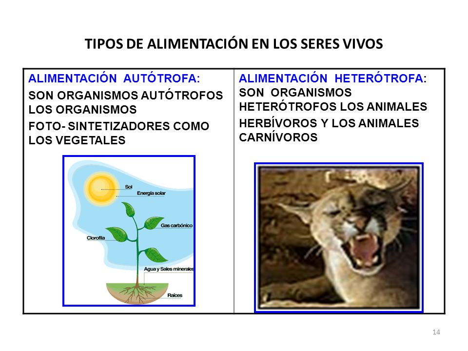 TIPOS DE ALIMENTACIÓN EN LOS SERES VIVOS