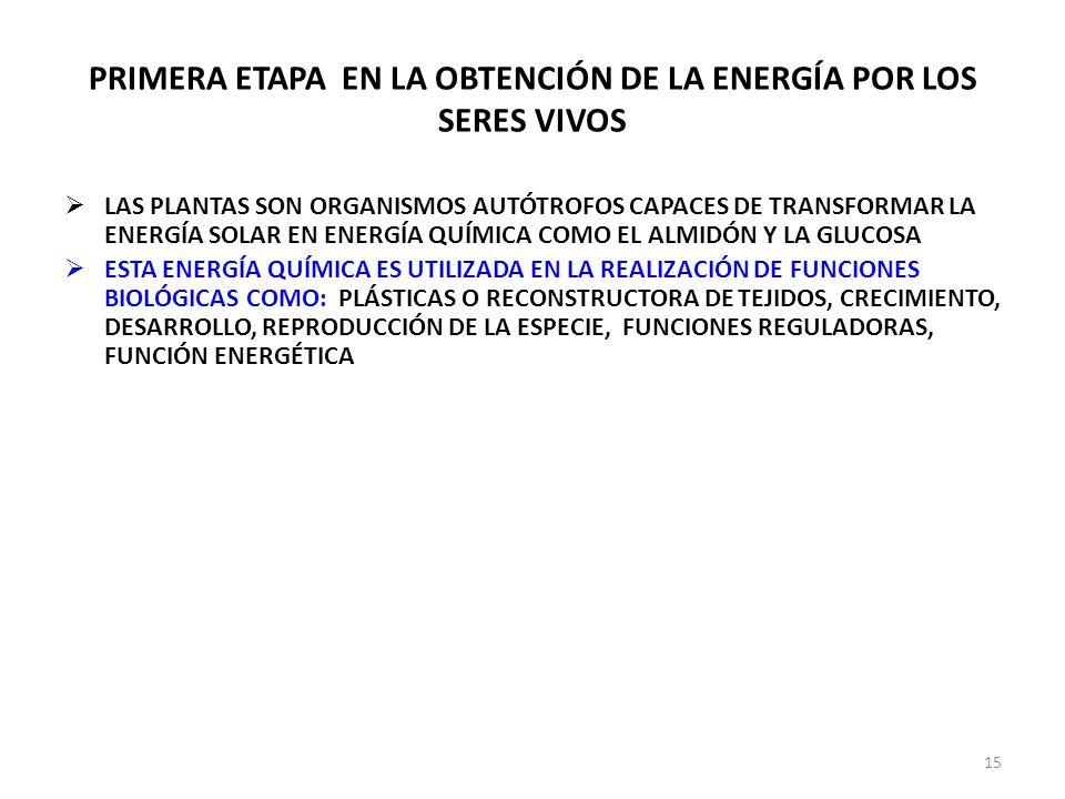PRIMERA ETAPA EN LA OBTENCIÓN DE LA ENERGÍA POR LOS SERES VIVOS