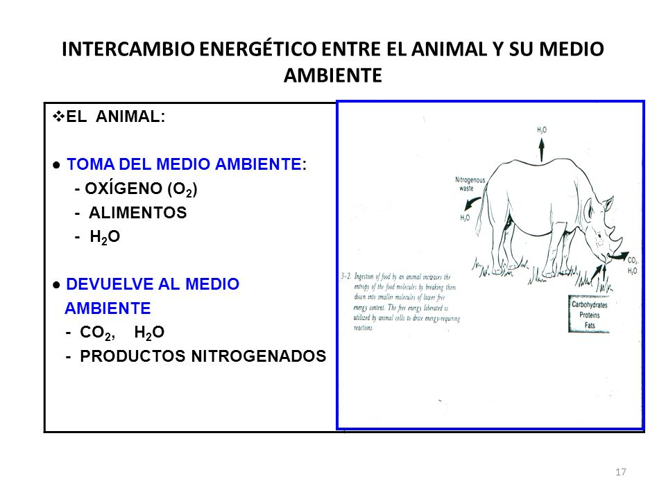 INTERCAMBIO ENERGÉTICO ENTRE EL ANIMAL Y SU MEDIO AMBIENTE