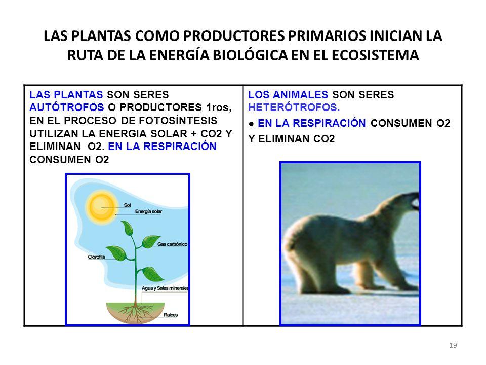 LAS PLANTAS COMO PRODUCTORES PRIMARIOS INICIAN LA RUTA DE LA ENERGÍA BIOLÓGICA EN EL ECOSISTEMA