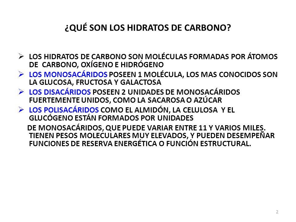 ¿QUÉ SON LOS HIDRATOS DE CARBONO