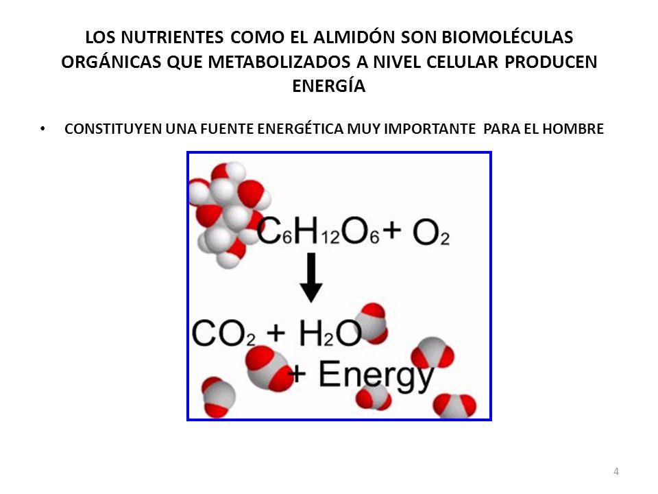 LOS NUTRIENTES COMO EL ALMIDÓN SON BIOMOLÉCULAS ORGÁNICAS QUE METABOLIZADOS A NIVEL CELULAR PRODUCEN ENERGÍA