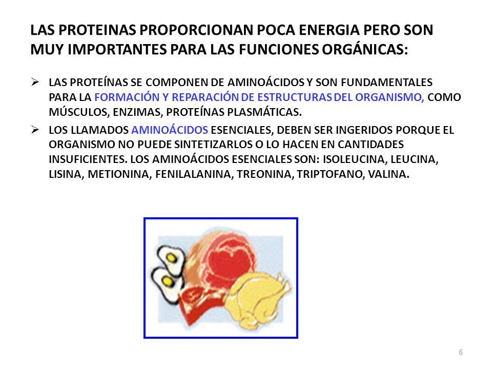 LAS PROTEINAS PROPORCIONAN POCA ENERGIA PERO SON MUY IMPORTANTES PARA LAS FUNCIONES ORGÁNICAS: