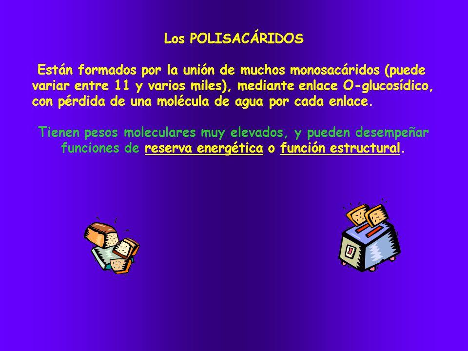 Los POLISACÁRIDOS