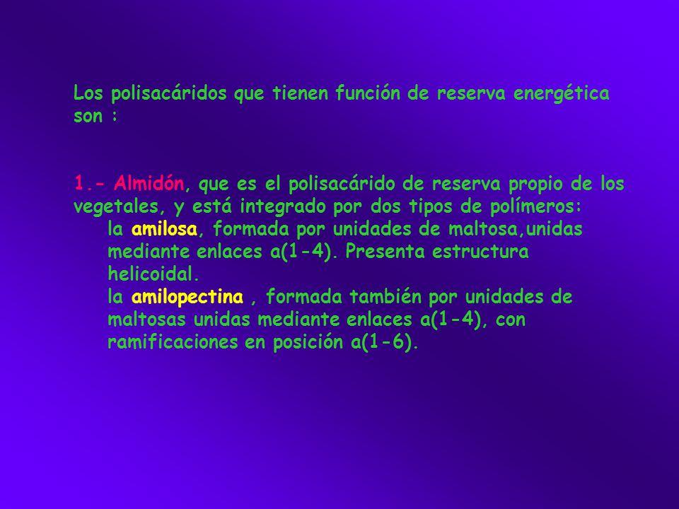 Los polisacáridos que tienen función de reserva energética son :