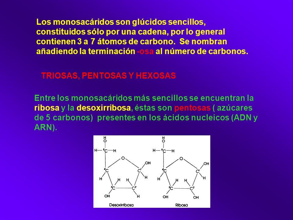 Los monosacáridos son glúcidos sencillos, constituidos sólo por una cadena, por lo general contienen 3 a 7 átomos de carbono. Se nombran añadiendo la terminación -osa al número de carbonos.