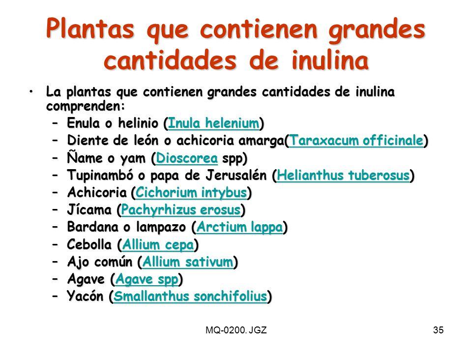 Plantas que contienen grandes cantidades de inulina