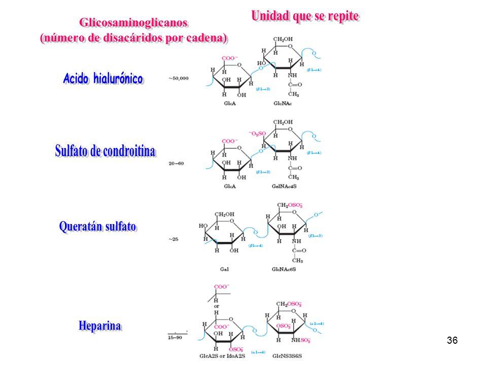 (número de disacáridos por cadena) Sulfato de condroitina