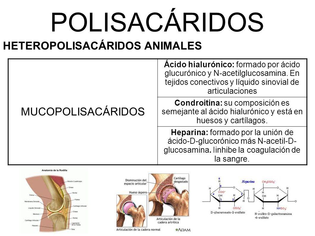 POLISACÁRIDOS MUCOPOLISACÁRIDOS HETEROPOLISACÁRIDOS ANIMALES