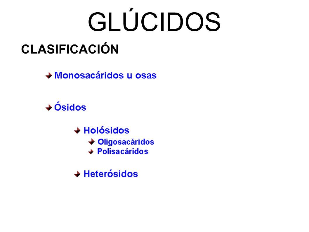GLÚCIDOS CLASIFICACIÓN