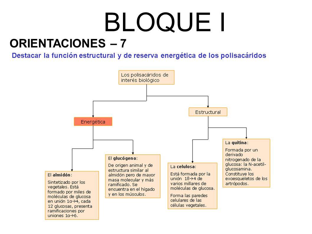BLOQUE I ORIENTACIONES – 7