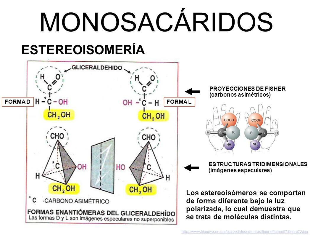 MONOSACÁRIDOS ESTEREOISOMERÍA Los estereoisómeros se comportan