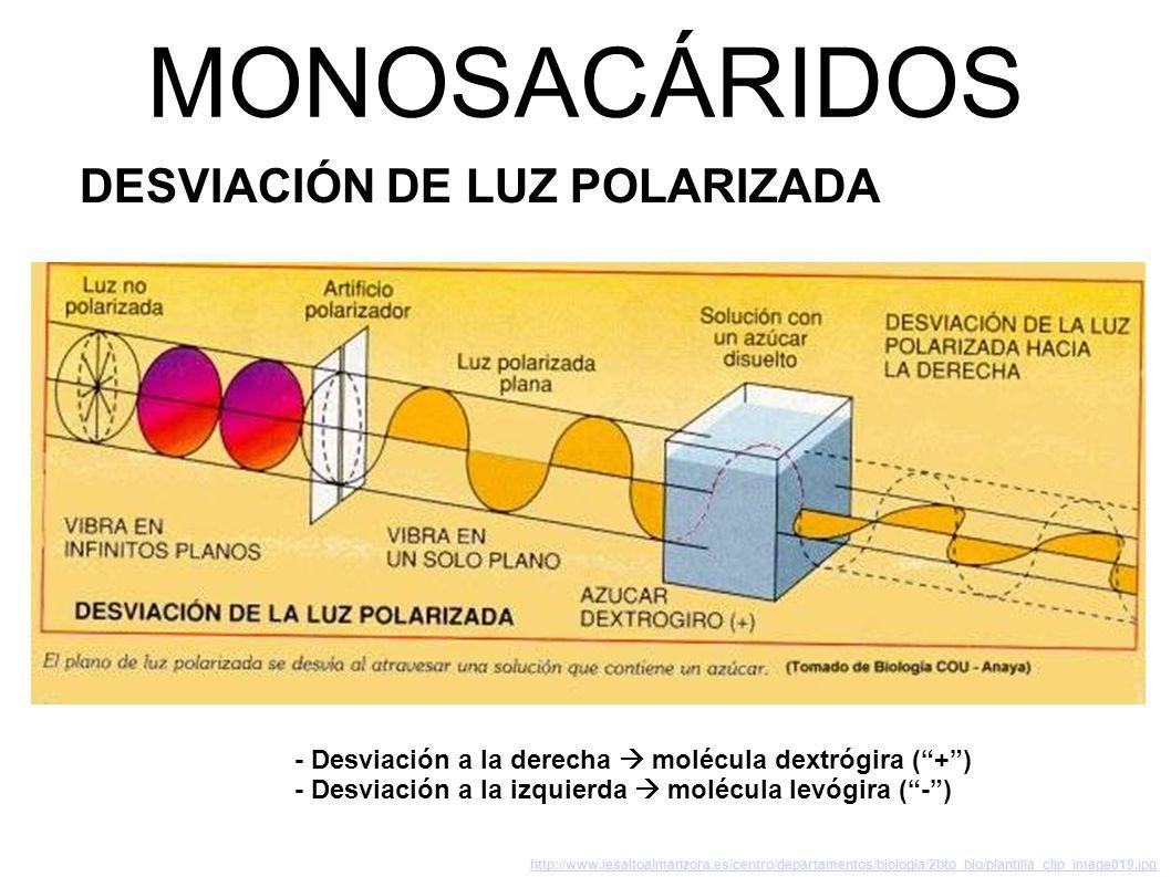 MONOSACÁRIDOS DESVIACIÓN DE LUZ POLARIZADA