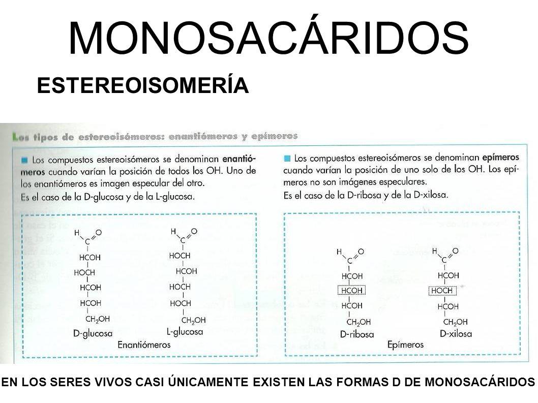 MONOSACÁRIDOS ESTEREOISOMERÍA