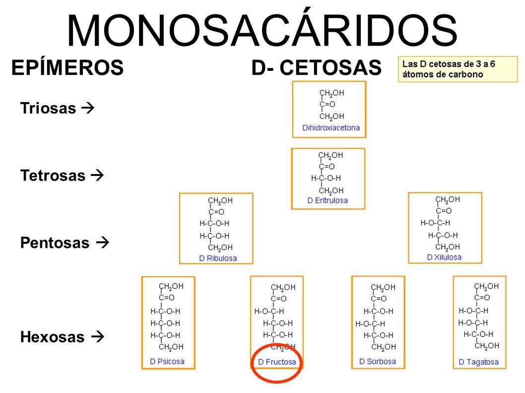 MONOSACÁRIDOS EPÍMEROS D- CETOSAS Triosas  Tetrosas  Pentosas 