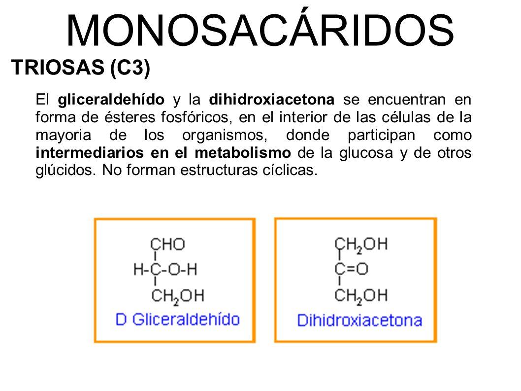 MONOSACÁRIDOS TRIOSAS (C3)