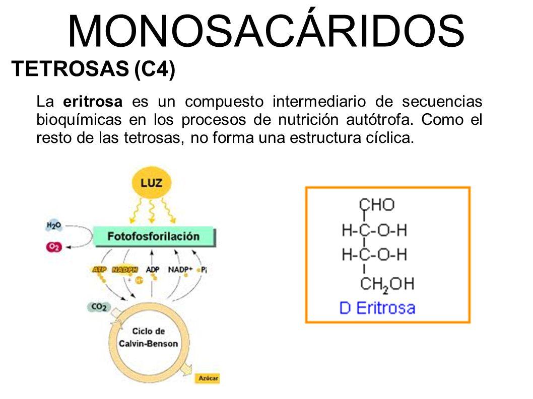 MONOSACÁRIDOS TETROSAS (C4)
