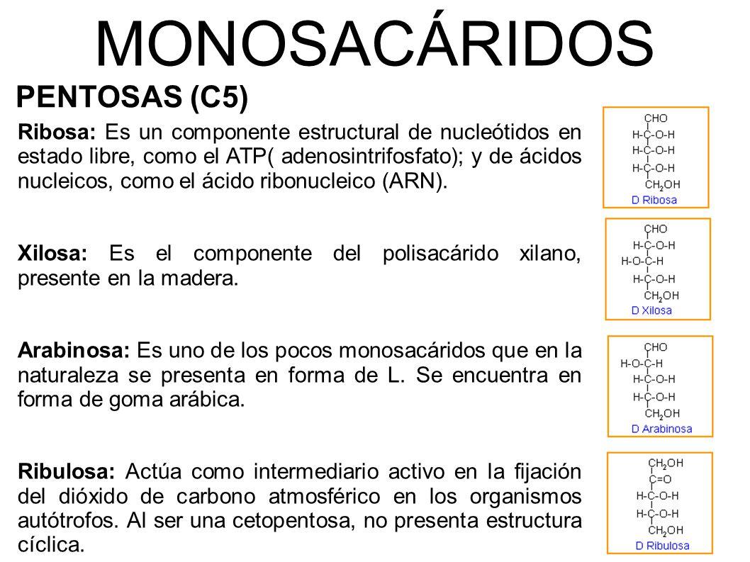 MONOSACÁRIDOS PENTOSAS (C5)