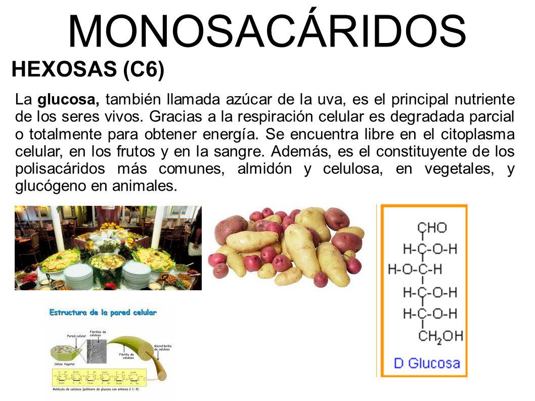 MONOSACÁRIDOS HEXOSAS (C6)