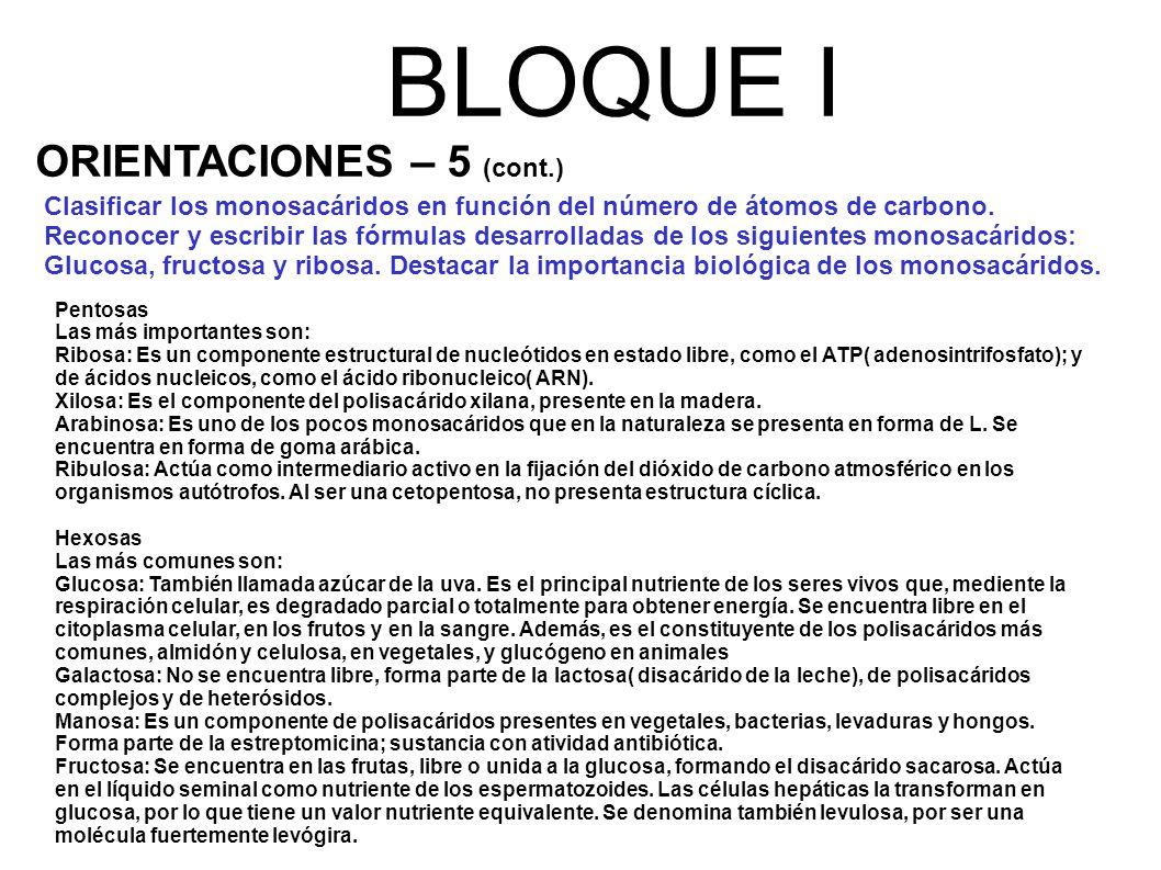 BLOQUE I ORIENTACIONES – 5 (cont.)