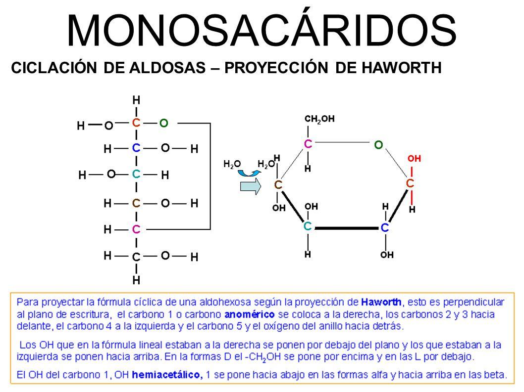 MONOSACÁRIDOS CICLACIÓN DE ALDOSAS – PROYECCIÓN DE HAWORTH H2O H2O
