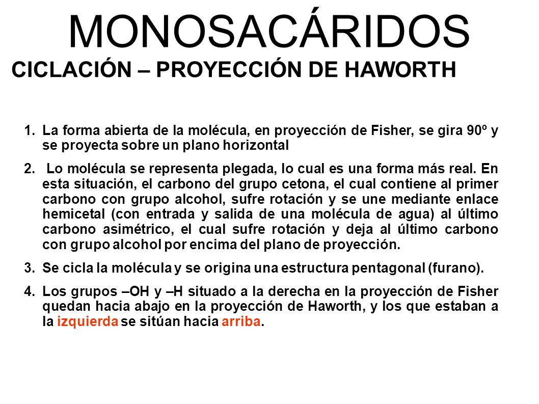 MONOSACÁRIDOS CICLACIÓN – PROYECCIÓN DE HAWORTH