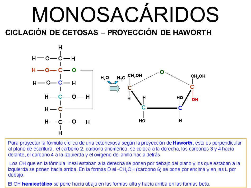 MONOSACÁRIDOS CICLACIÓN DE CETOSAS – PROYECCIÓN DE HAWORTH H2O H2O