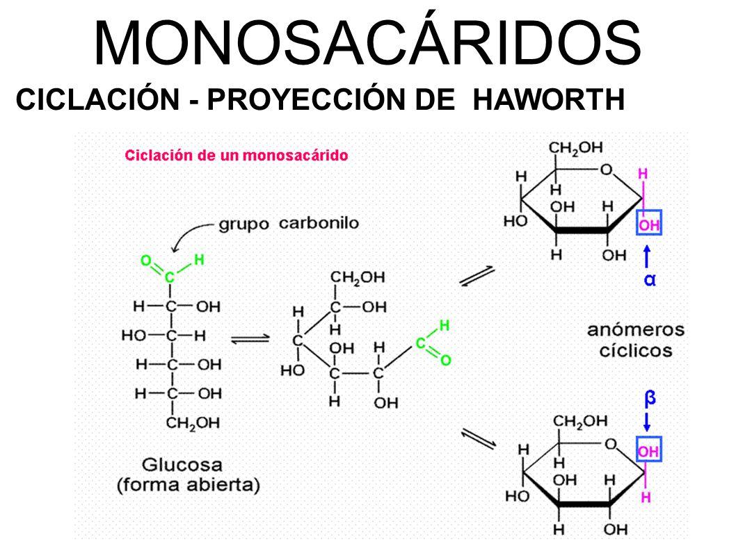 MONOSACÁRIDOS CICLACIÓN - PROYECCIÓN DE HAWORTH
