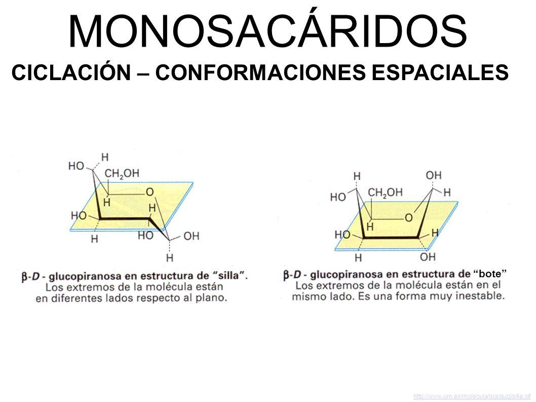 MONOSACÁRIDOS CICLACIÓN – CONFORMACIONES ESPACIALES bote