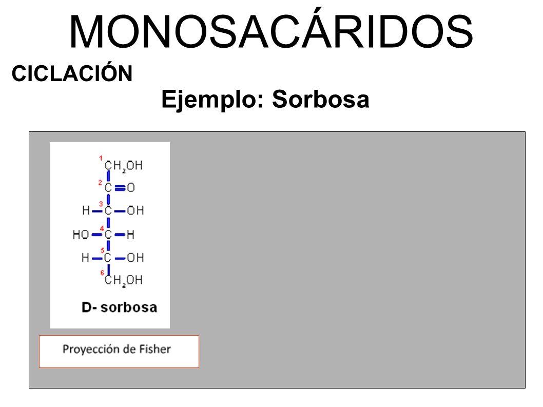 MONOSACÁRIDOS CICLACIÓN Ejemplo: Sorbosa β-D-sorbofuranosa