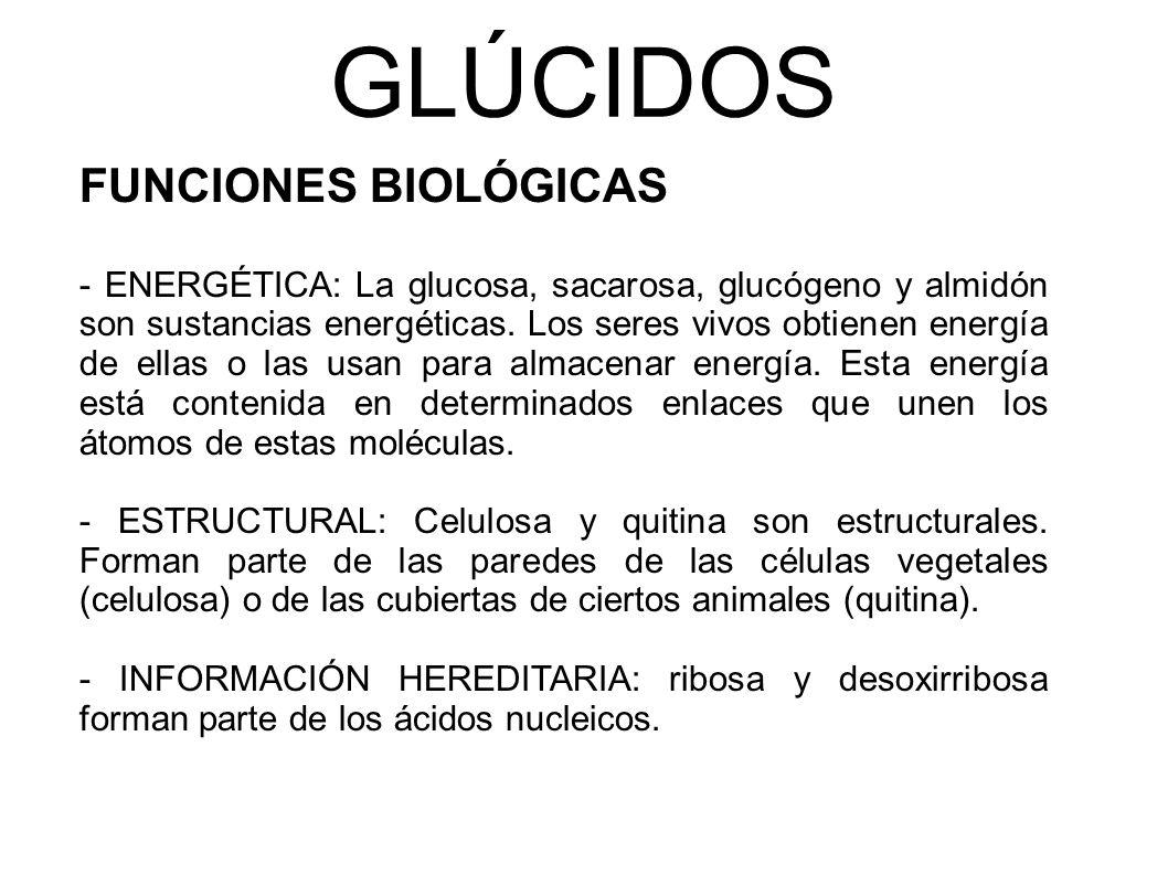 GLÚCIDOS FUNCIONES BIOLÓGICAS