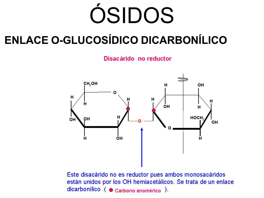 ÓSIDOS ENLACE O-GLUCOSÍDICO DICARBONÍLICO