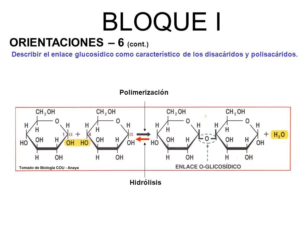 BLOQUE I ORIENTACIONES – 6 (cont.)