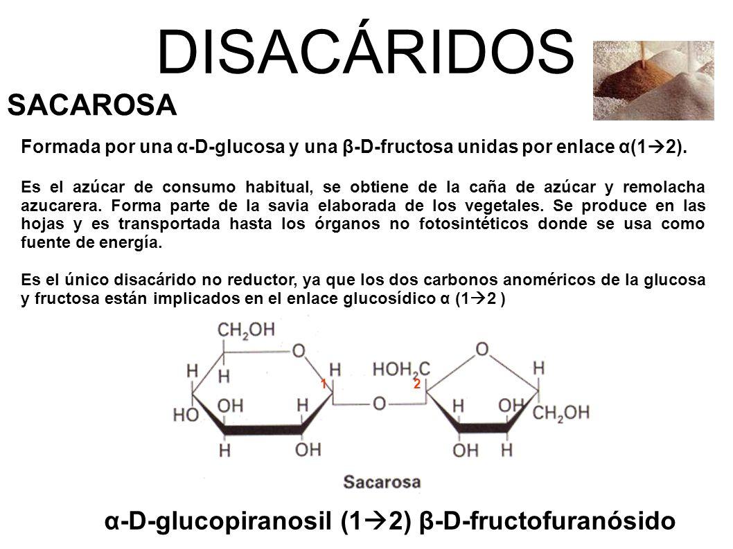 DISACÁRIDOS SACAROSA α-D-glucopiranosil (12) β-D-fructofuranósido