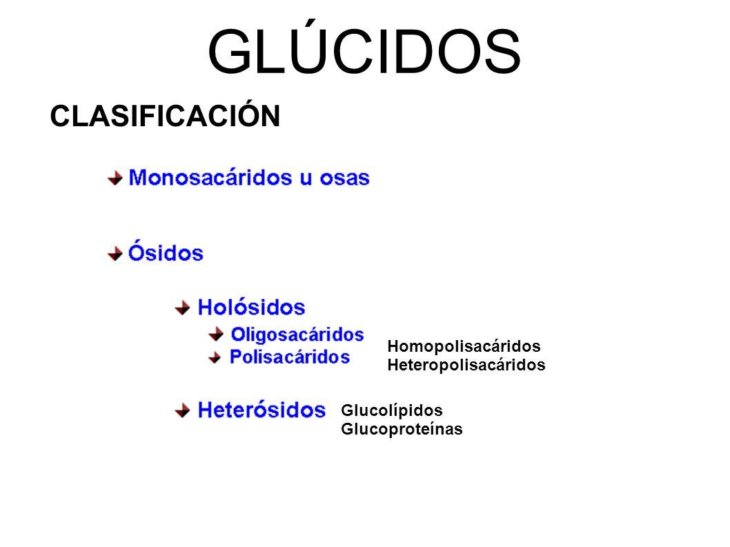 GLÚCIDOS CLASIFICACIÓN Homopolisacáridos Heteropolisacáridos