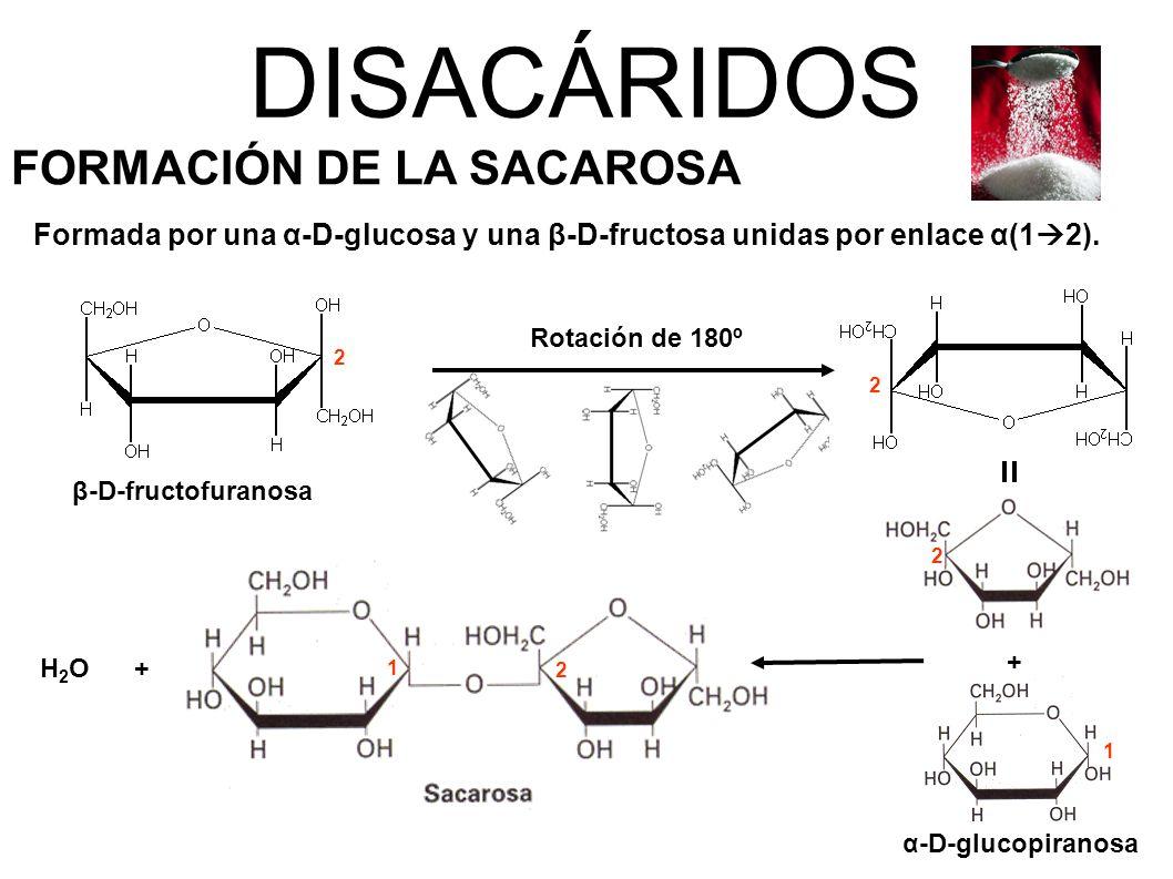 DISACÁRIDOS FORMACIÓN DE LA SACAROSA