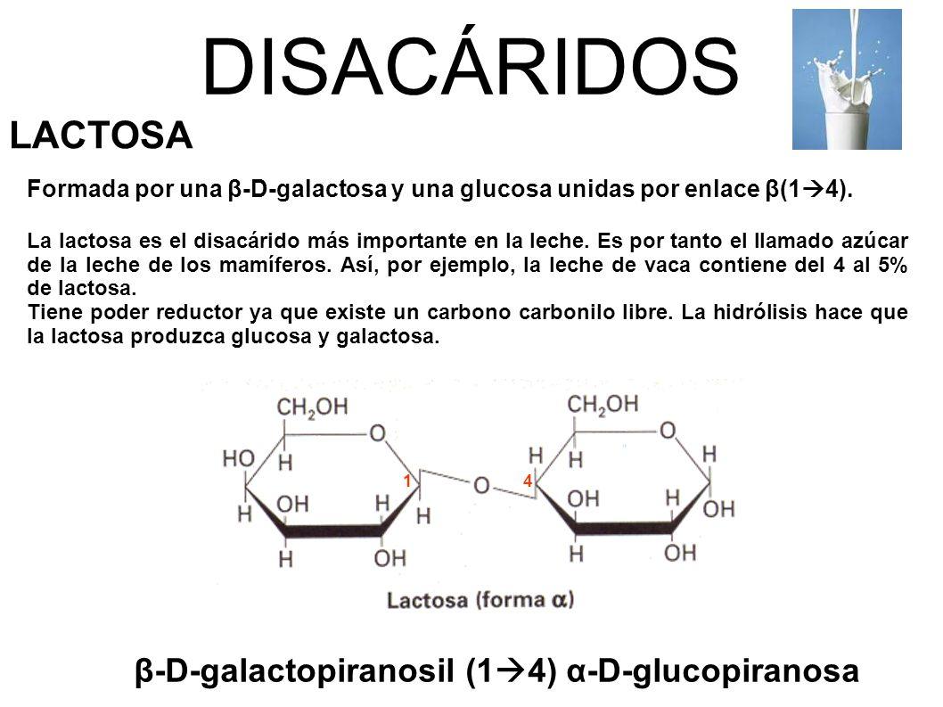 DISACÁRIDOS LACTOSA β-D-galactopiranosil (14) α-D-glucopiranosa