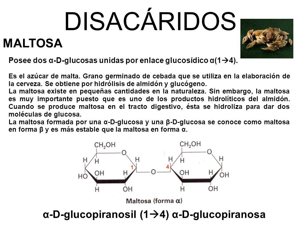 DISACÁRIDOS MALTOSA α-D-glucopiranosil (14) α-D-glucopiranosa