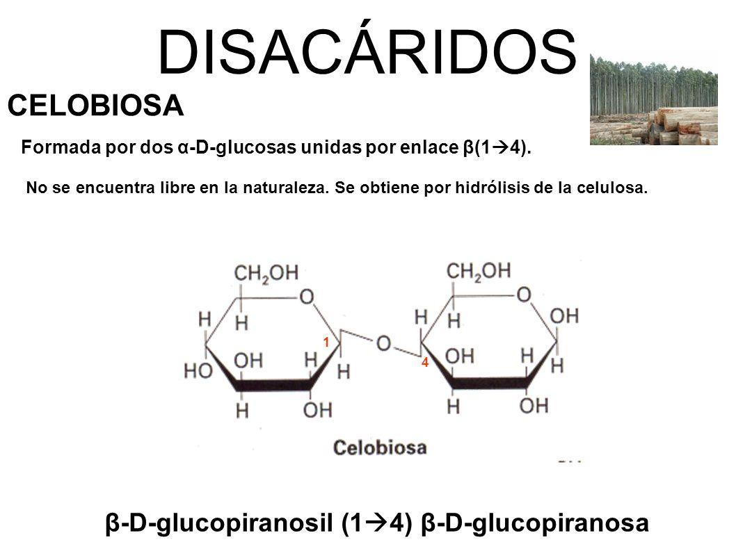 DISACÁRIDOS CELOBIOSA β-D-glucopiranosil (14) β-D-glucopiranosa