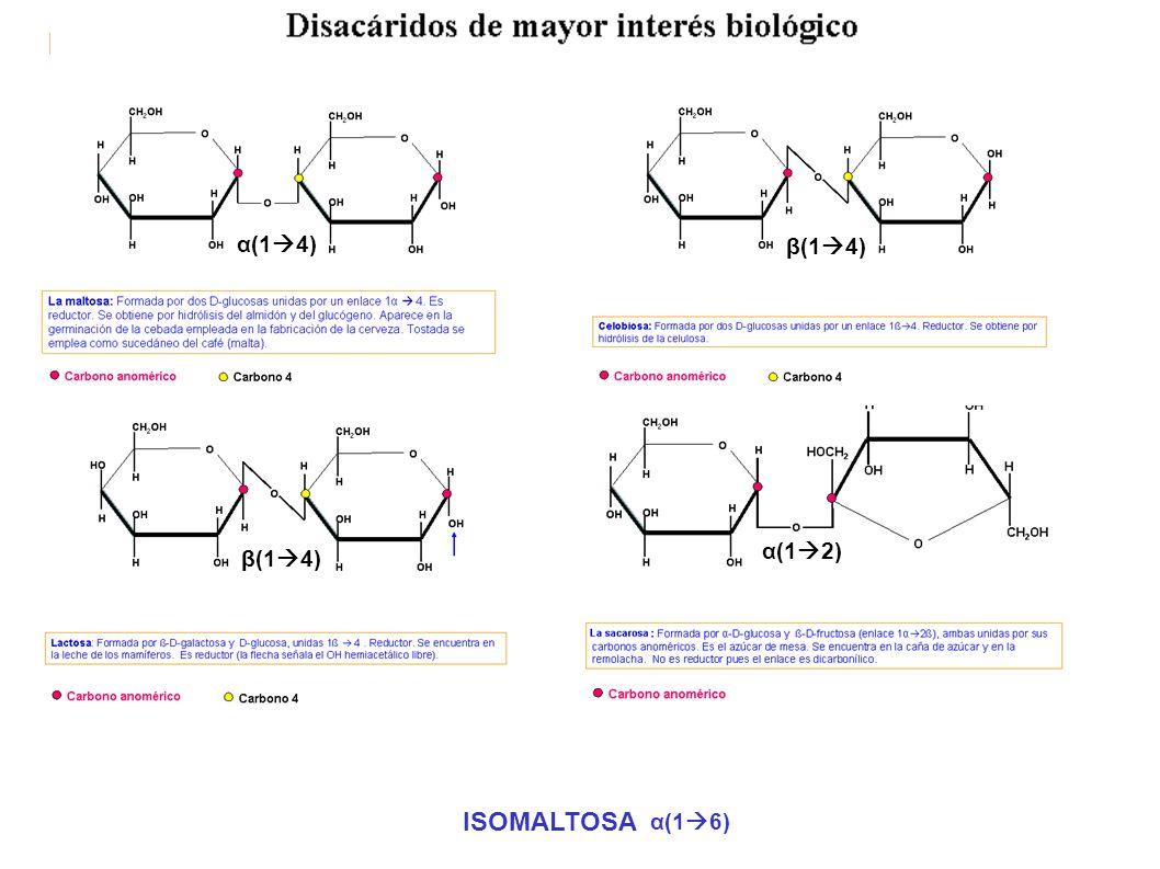 α(14) β(14) α(12) β(14) ISOMALTOSA α(16)