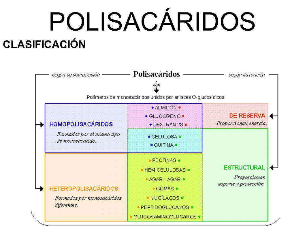 POLISACÁRIDOS CLASIFICACIÓN