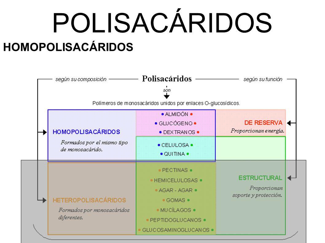 POLISACÁRIDOS HOMOPOLISACÁRIDOS