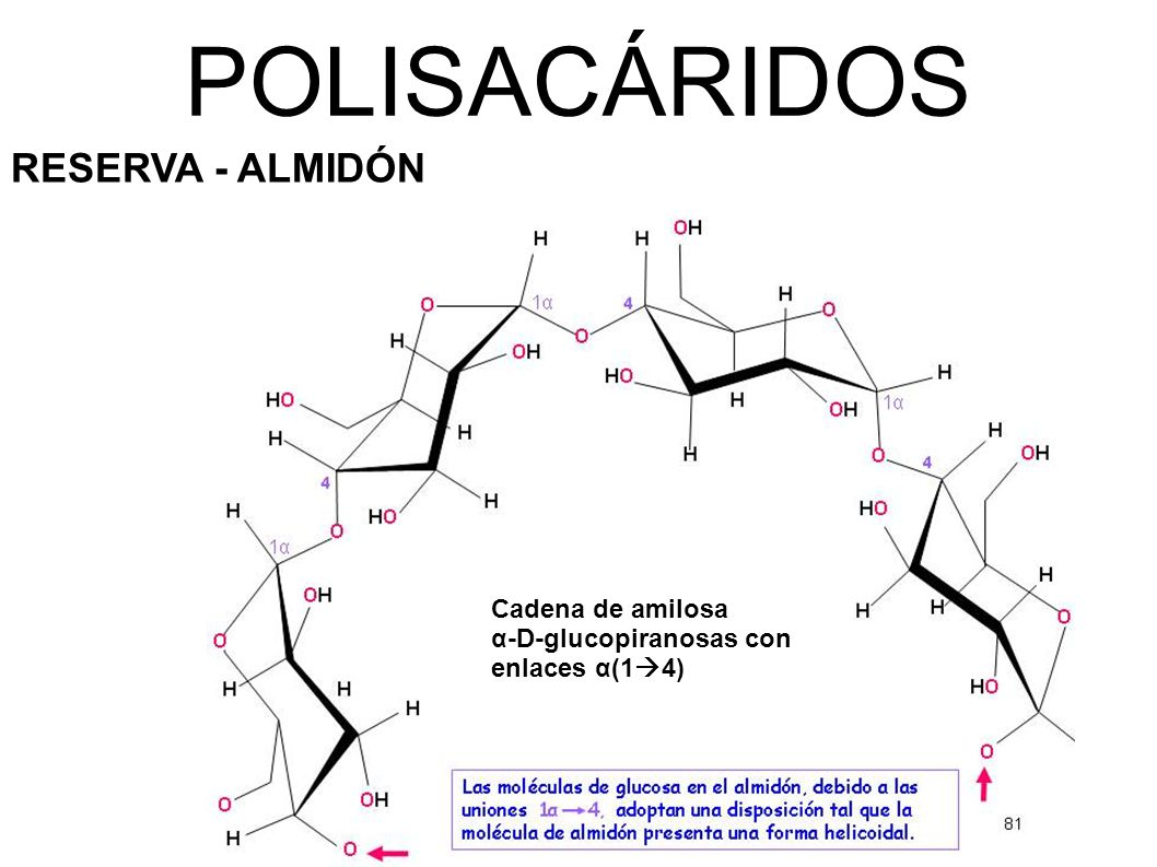 POLISACÁRIDOS RESERVA - ALMIDÓN Cadena de amilosa