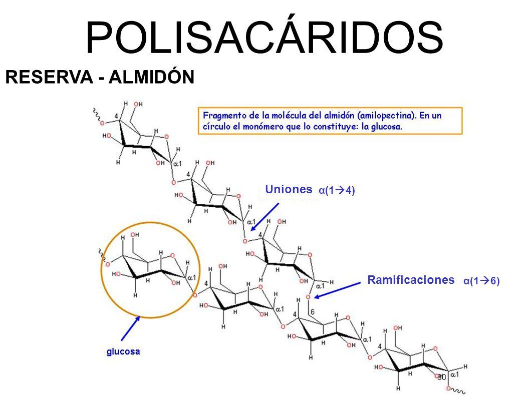 POLISACÁRIDOS RESERVA - ALMIDÓN Uniones α(14) Ramificaciones α(16)