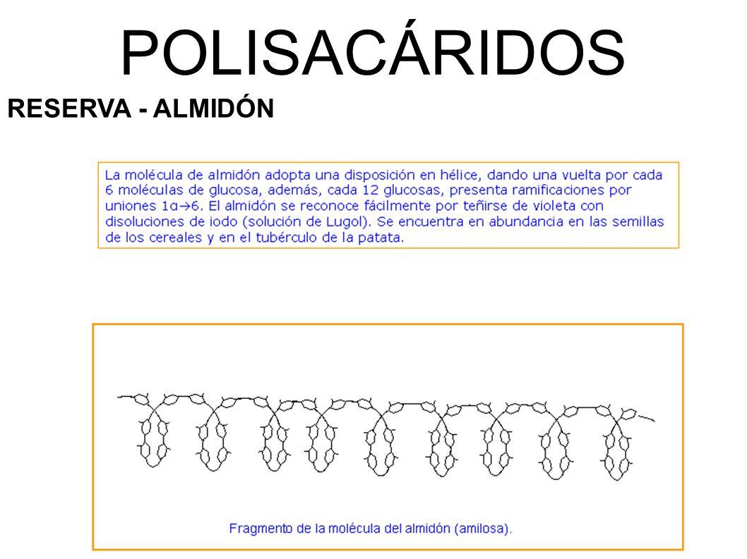 POLISACÁRIDOS RESERVA - ALMIDÓN
