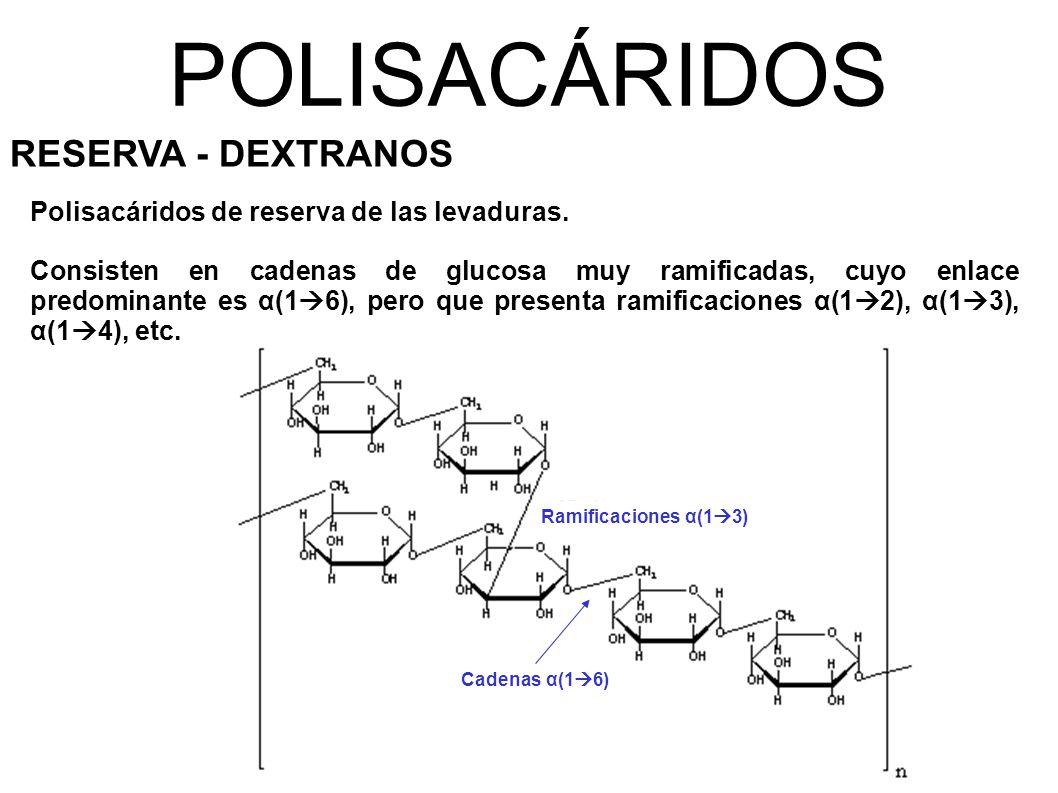 POLISACÁRIDOS RESERVA - DEXTRANOS