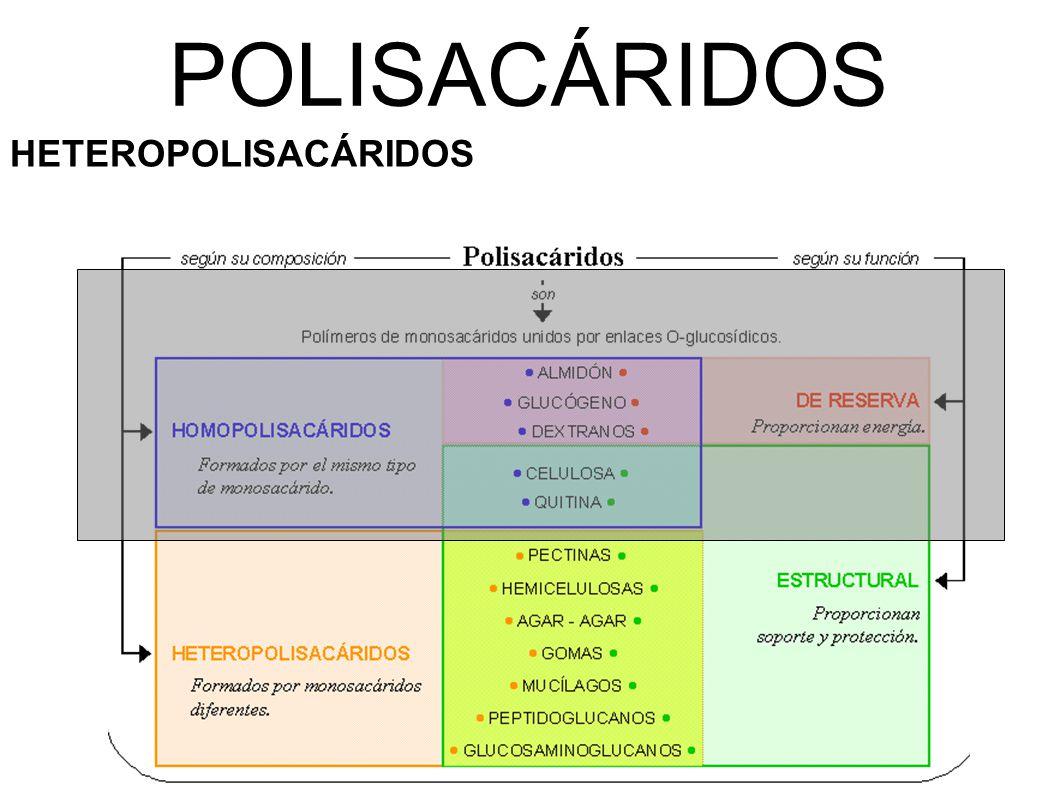 POLISACÁRIDOS HETEROPOLISACÁRIDOS