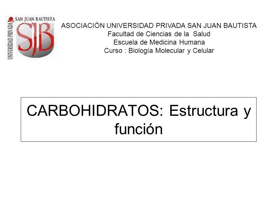 CARBOHIDRATOS: Estructura y función