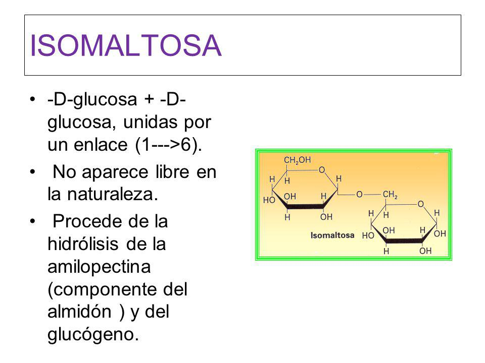 ISOMALTOSA -D-glucosa + -D-glucosa, unidas por un enlace (1--->6).